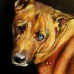 hondenportret